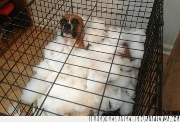 cojin,explotar,jaula,perro,problema