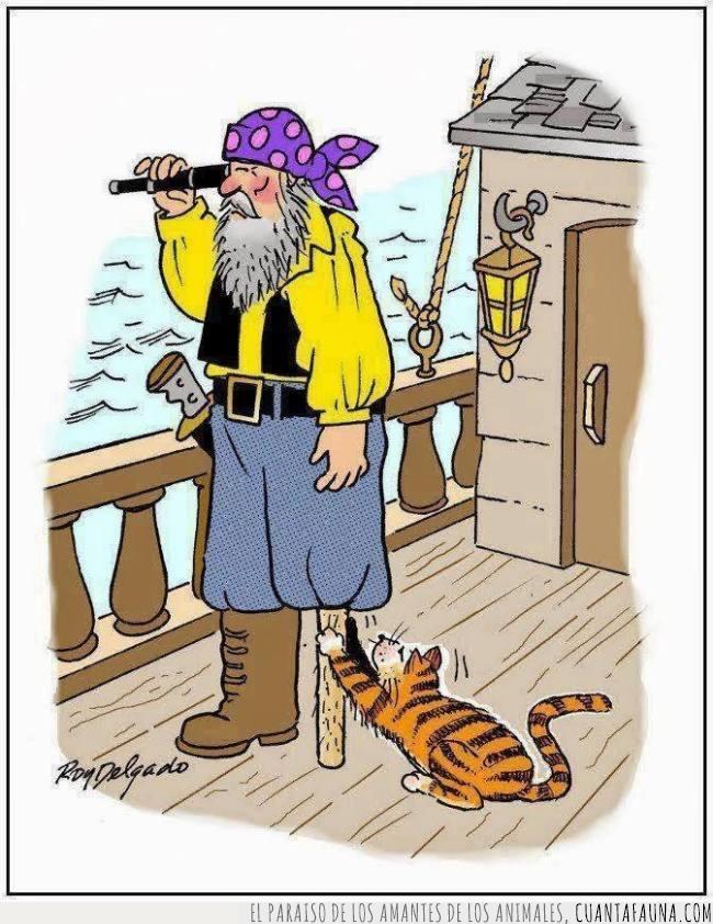 gato,pata,pirata,rascador,vida