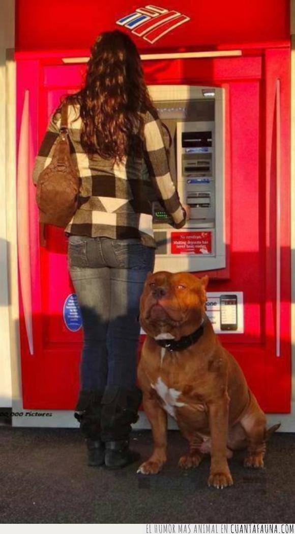 cajero automático,dinero,miedo,mujer,perro,pitbull,protector
