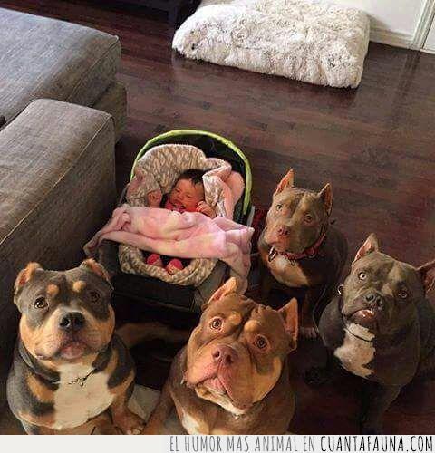 bebé,cuaro,cuidado,guardaespalda,perro,vigilan,vigilando