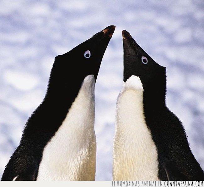 adelaida,antártico,nidos,pareja,piedras,pingüinos
