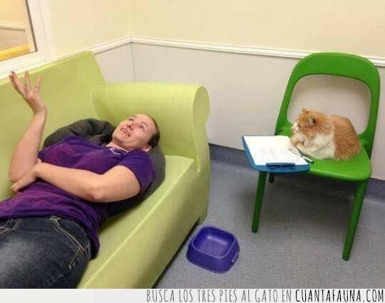 gato,hablar,problemas,psicólogo,sesión,terapia