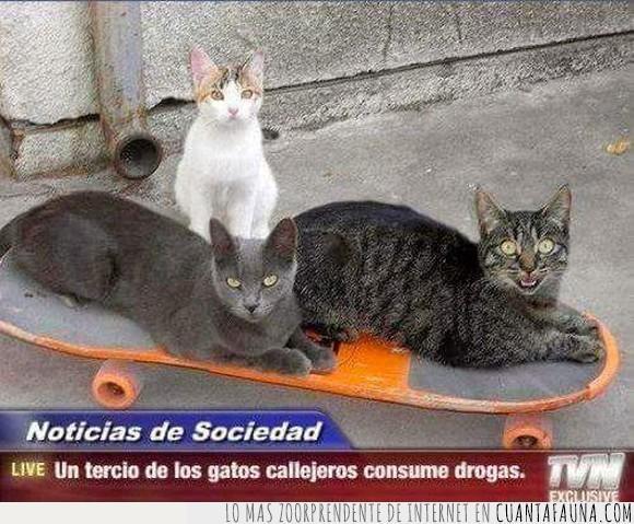 callejeros,drogas,gatos,telenoticias