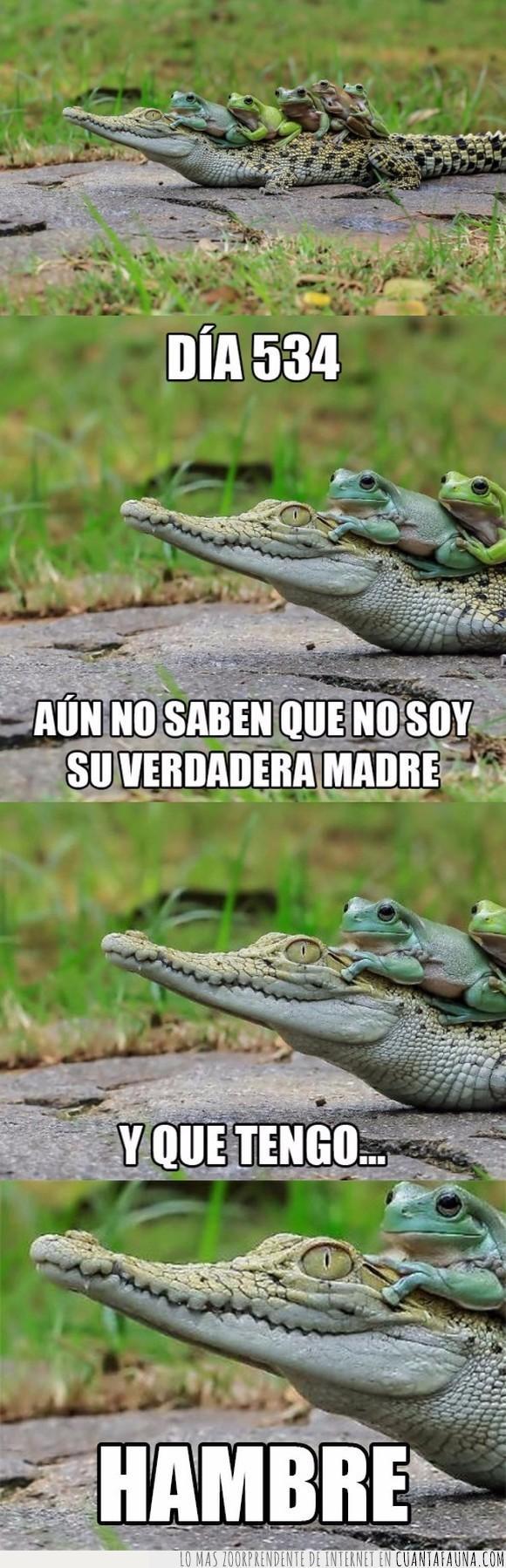 cocodrilo,madre,ranas