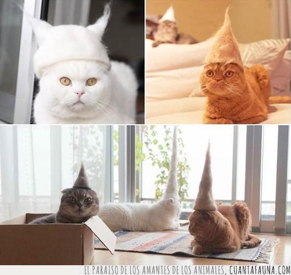 estilo,gatos,lucir,moda,pelusa,sombrero