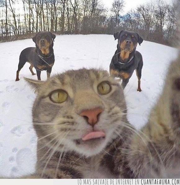 gato,perros,rottweillers,selfie