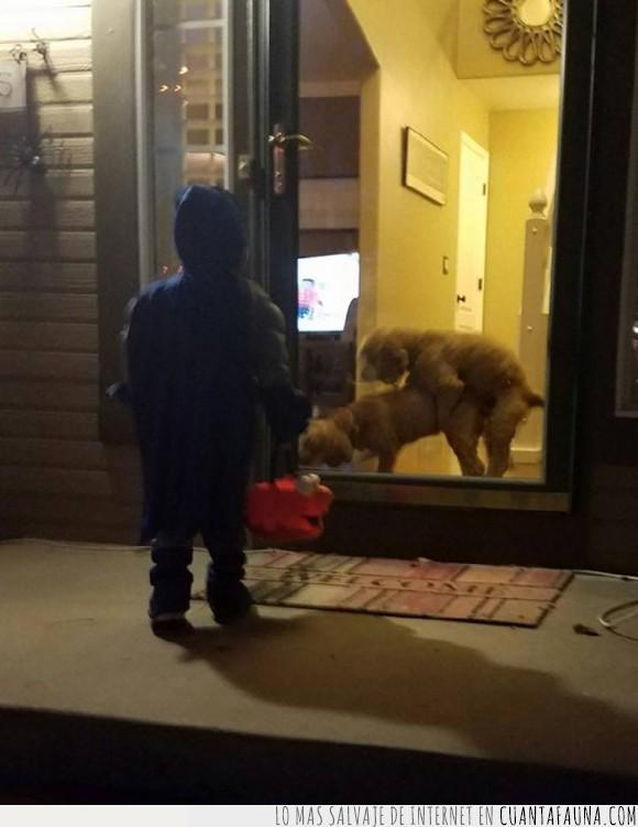 batman,foll*,halloween,niño,perros,wtf
