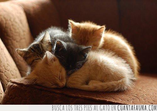 buenas noches,cachorros,crías,dormir,durmiendo,gatos,montón