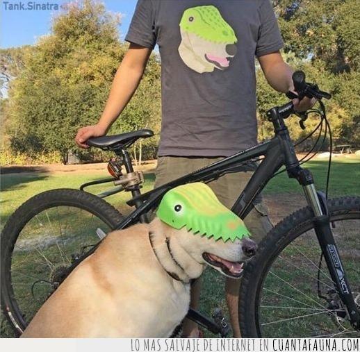 bici,casco,cocodrilo,decir,molar,montar,perro