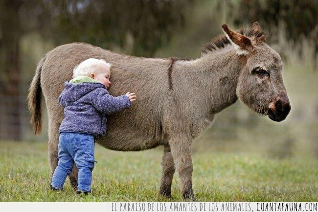 abrazo,amor,burro,demasiado,niño,pequeño,suficiente