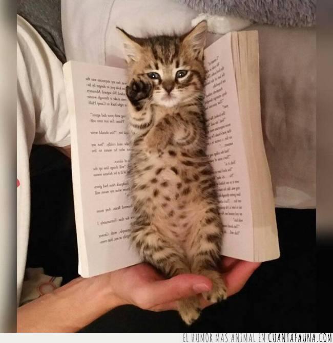 cachorro,gato,interrumpir,lectura,libro,páginas,pequeño