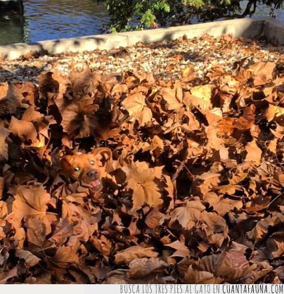 camuflaje,can,hojas,perro