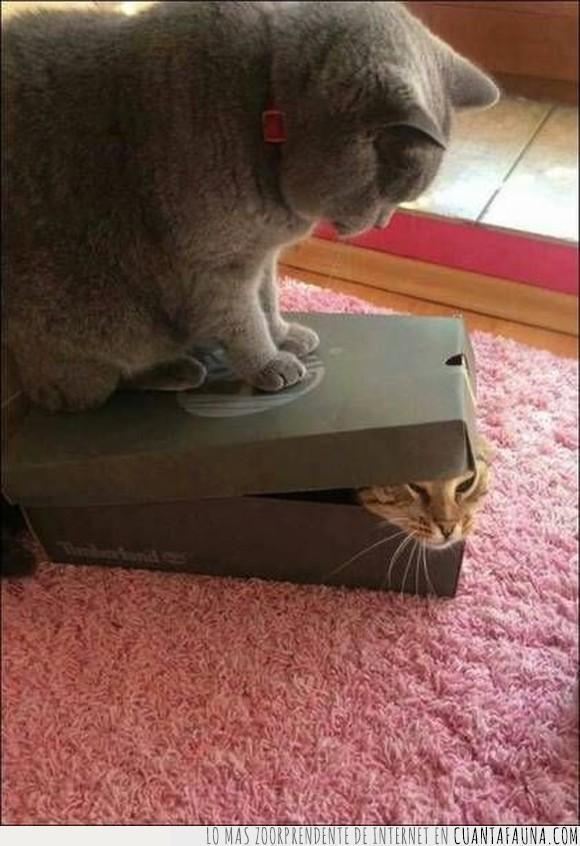 felinos,gatos,travesuras
