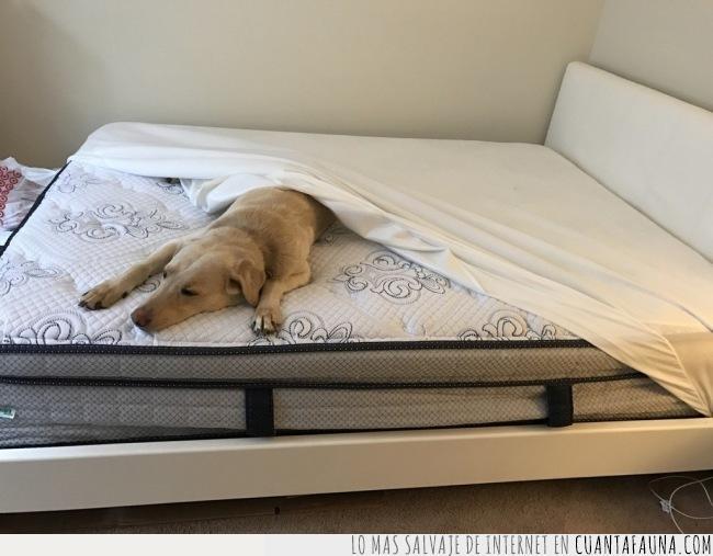 apartar,cama,colchón,dormir,esquina,perro,poner,sábana