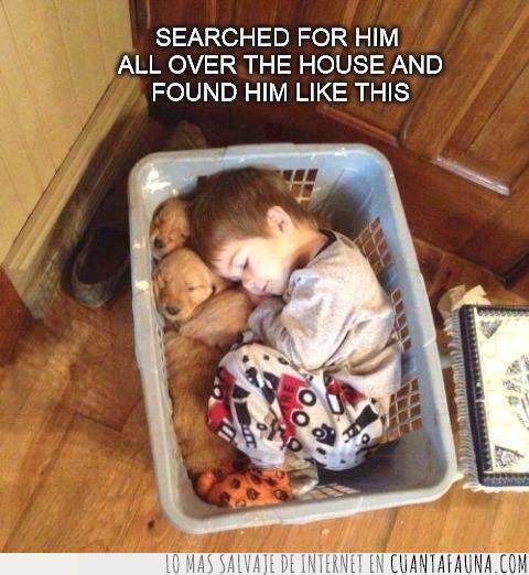 cachorros,cesta,durmiendo,niño,perros