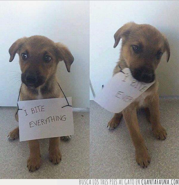 cartel,muerde,papel,perro,todo