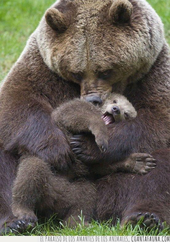 abrazo,amor,cría,expresión,hijo,madre,mama,oso