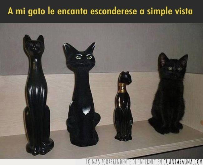 camuflaje,esconde,esconder,espía,estatua,figura,gato,negro,simple,vista