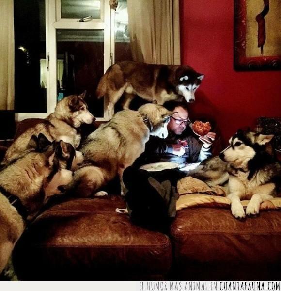 animales,buitre,comer,comida,perro,wow
