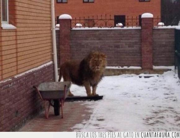 camino,humor,leon,narnia,wtf
