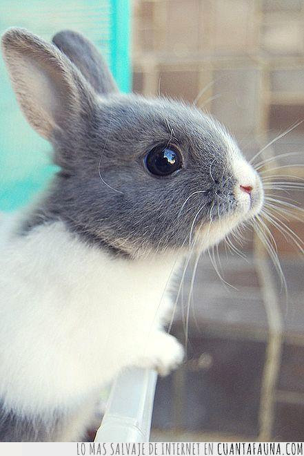 amor,belleza,blanco,bonito,cachorro,conejito,conejo,gris,pequeño,suerte