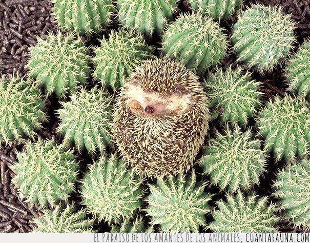 bola,cactus,diferencias,dormido,erizo,escondido,parecido