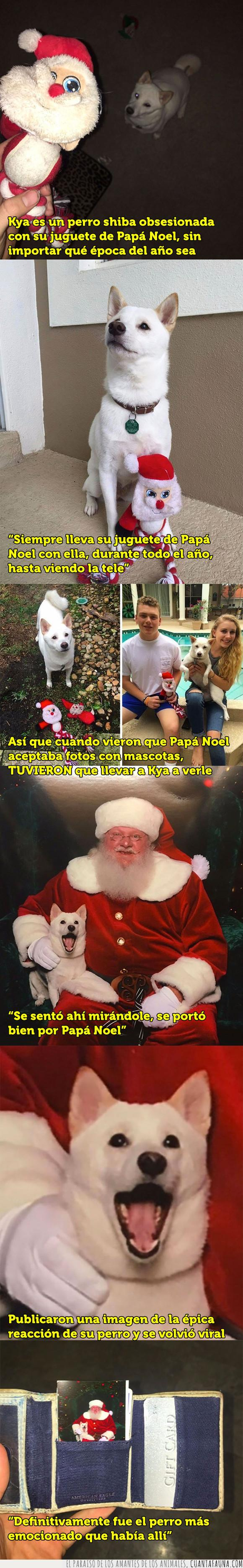 espíritu navideño,navidad,perro,santa claus