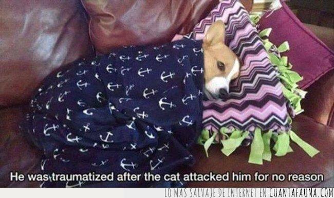 ataque,gato,perro,razón,trauma