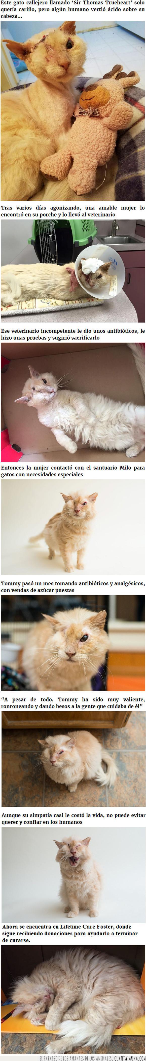 adopción,gato,niña,rescate