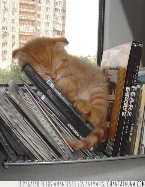 antes,cachorro,cría,dormir,dvd,escoger,gato,naranja,peli