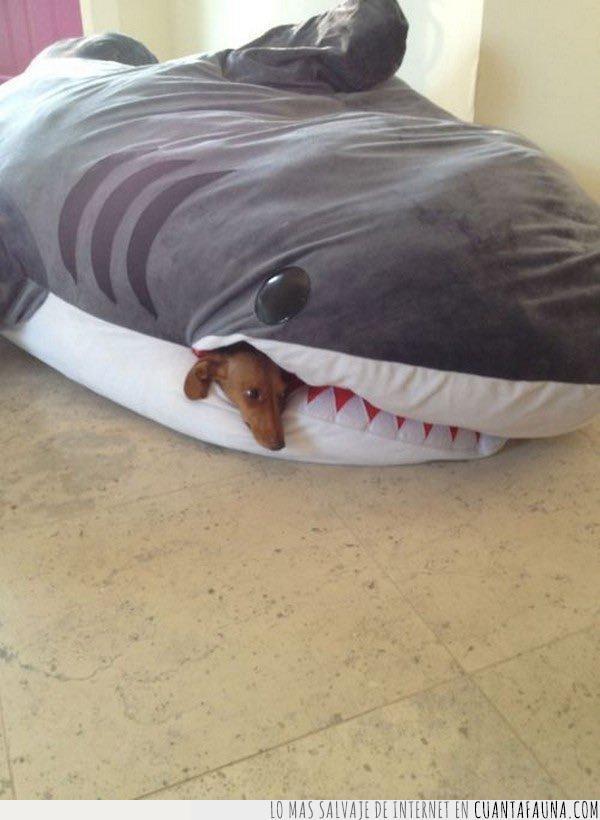 boca,comer,morder,película,peluche,perro,secuela,tiburón