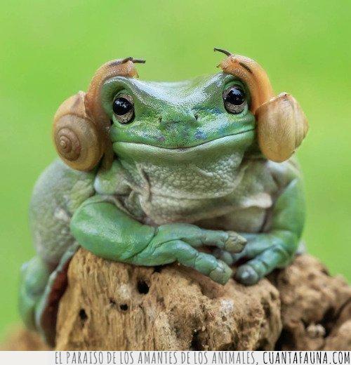 cabeza,caracoles,guerra de las galaxias,leia,peinado,rana,star wars,verde