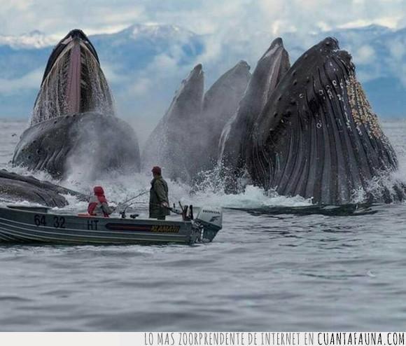Ballenas,lancha,mar,oceáno