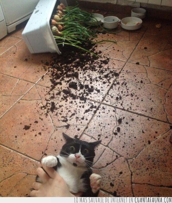 cebollas,félido,felino,gato,travieso