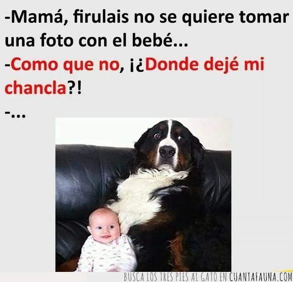 bebe,chancla,perro