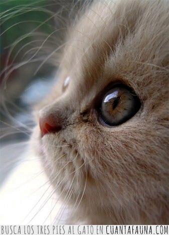 bonito,día,gato,mirada,ojos,ver