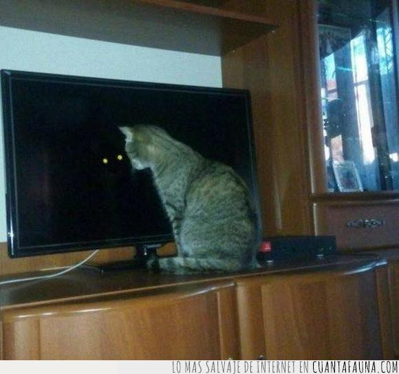 demonio,gato,humor,jaja,televisor,wtf