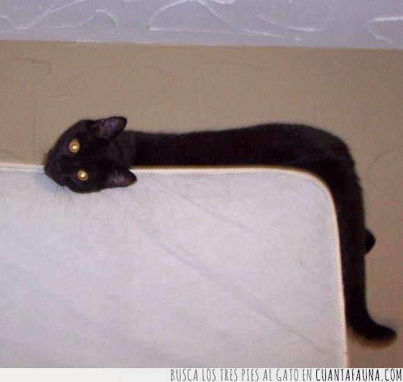 félido,felino,gato,sillón