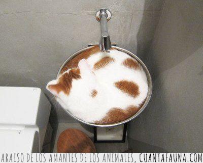 café,cappuccino,cuerpo,gato,horas,manchas,pide