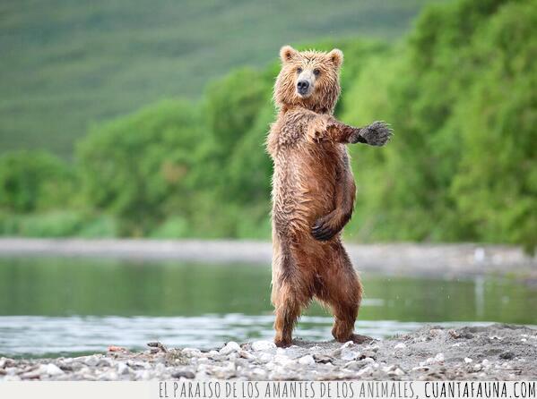 admitir,baile,mejor,oso,río,tú
