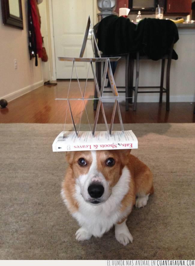 cabeza,castillo,corgi,demostración,equilibrio,libro,naipes,perro