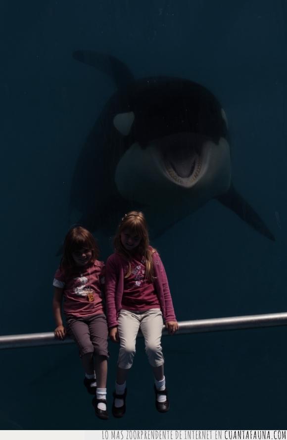 acuario,Ballena,niñas,orca