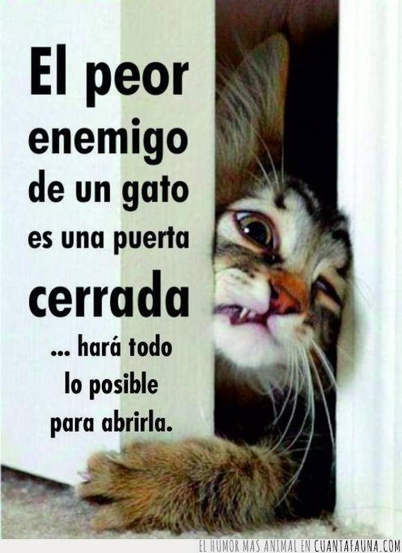 fastidiar,gato,joder,puerta cerrada