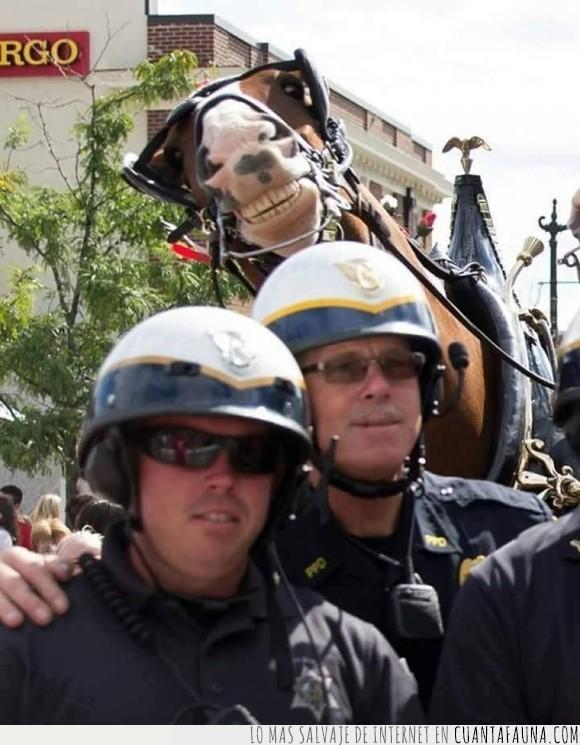 caballo,humor,jaja,photobomb,policia,selfie