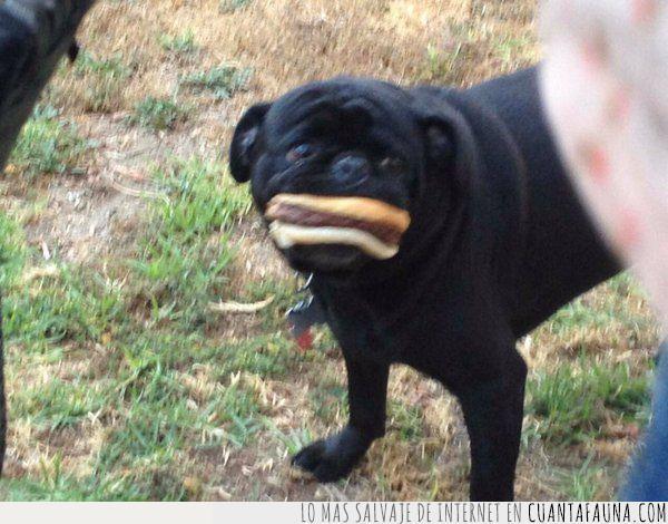 boca,canción,comida,five,hamburguesa,letra,maroon,perro,sonrisa