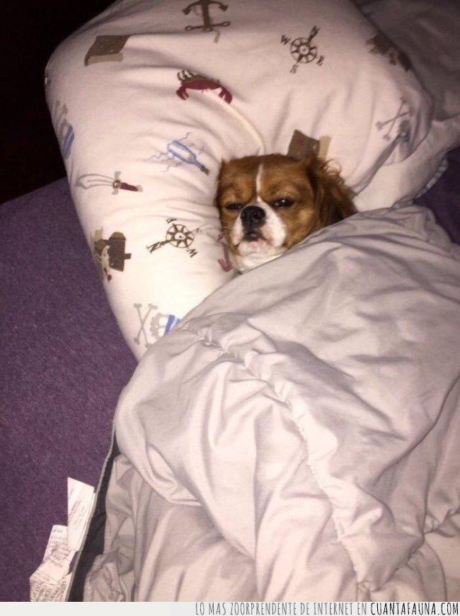 alarma,cama,levantar,odiar,perro,sonar,vida