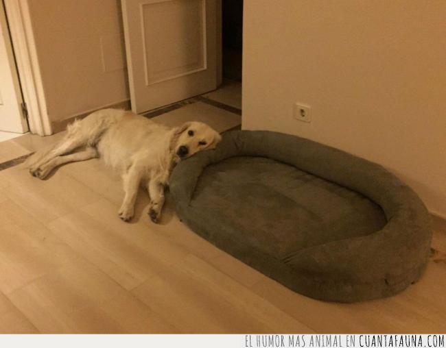 cama,cojín,descansar,lógica,mente,perro