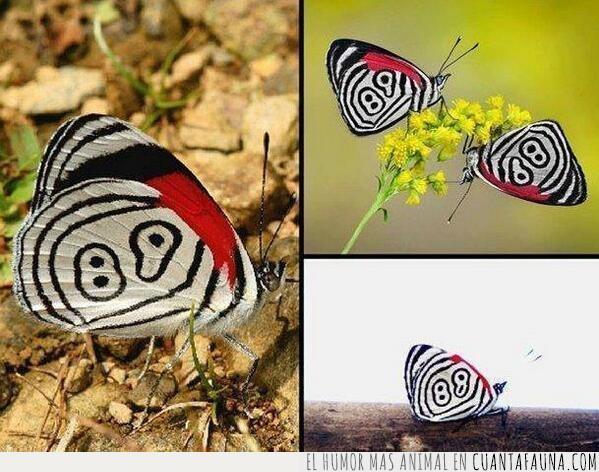 alas,blanco,lepidóptero,mariposa,negro,números,polilla