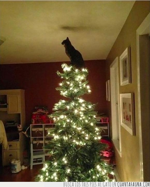 elegancia,félido,felino,fotografía,gato,pino de navidad