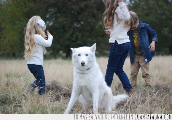 can,fotografía,humor,niños,perro
